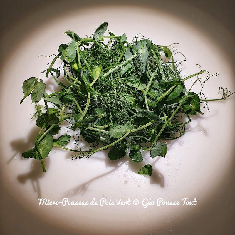 Micro-pousses de poids vert